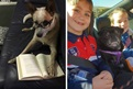 Banjo Bones enjoying a good book and Pele the Pug out with his guardians