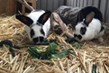 Bunnies Splodge & Shortie were adopted from RSPCA. They are 3 years old.