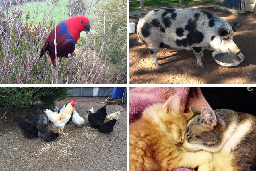 Some of our rescue officer Brigittes companion animals