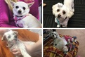Lisa fostered or adopted all of these cuties from the RSPCA. Peaches, Peggy-Sue, Indy and Macca are just adorable!