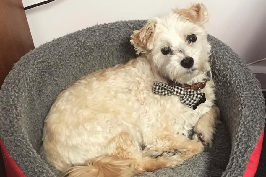 Billy dressed for any occasion in his fancy bowtie!