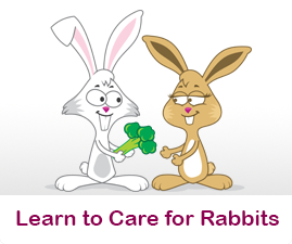 Learn to care for rabbits