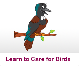 How to care for wild birds