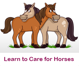 How to care for Horses