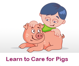 How to care for Pigs