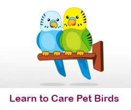 Learn to care for Pet Birds